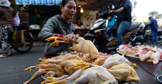 """CPI tăng bất thường, gà sắp được """"cởi"""" phí!"""