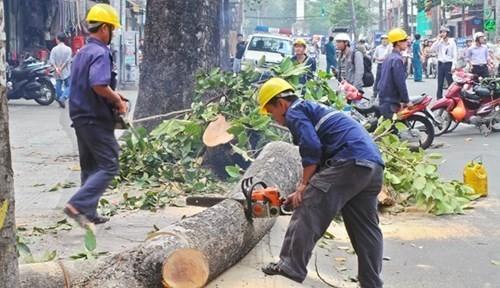 Cách chức, giáng chức nhiều cán bộ trong vụ chặt cây xanh