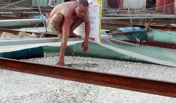 Báo cáo Thủ tướng tình trạng cá chết hạng loạt tại Đồng Nai