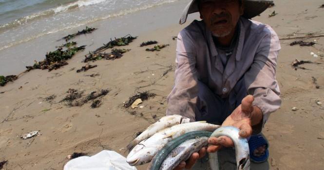 Chính phủ nghiêm cấm sử dụng, buôn bán hải sản chết bất thường