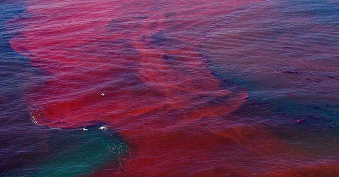 """Tìm nguyên nhân cá chết: Càng chậm trễ, càng khó tìm ra """"thủ phạm"""""""