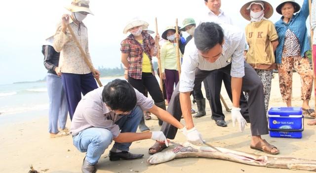 Cả 100 chuyên gia Việt Nam, quốc tế truy tìm nguyên nhân cá chết hàng loạt
