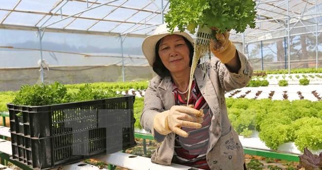 Trung Quốc là nước nhập khẩu rau quả lớn nhất của Việt Nam