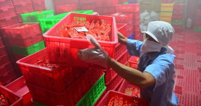 Vụ xúc xích Viet Foods: Doanh nghiệp gửi đơn kêu cứu, Thủ tướng chỉ đạo xem xét