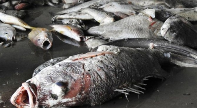 Bồi thường vụ cá chết: Sẽ tiếp tục yêu cầu bồi thường nếu xác định rõ thiệt hại