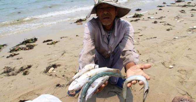 """Vụ Formosa: Đây là dịp để Việt Nam tuyên bố """"chọn cá, không chọn thép"""""""