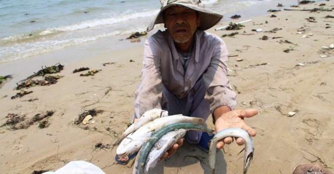 Formosa: Tổ chức, cá nhân có quyền khởi kiện yêu cầu bồi thường