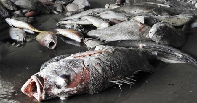 Sáng nay công bố hiện trạng môi trường biển từ Hà Tĩnh đến Thừa Thiên - Huế