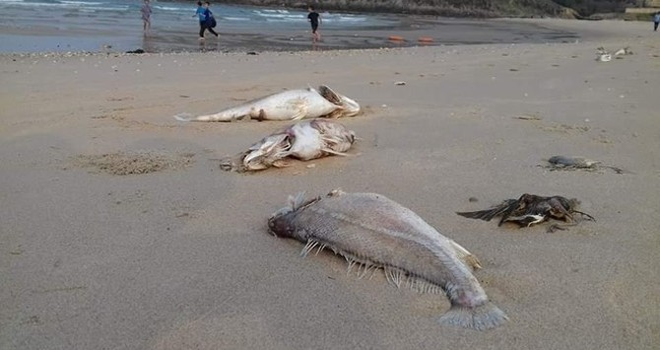 Chất xyanua và phenol giảm, 19 bãi tắm biển miền Trung đều an toàn