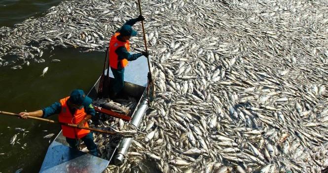 Thủ tướng yêu cầu làm rõ nguyên nhân cá chết bất thường ở Hồ Tây