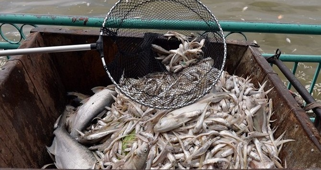 Người phát ngôn Chính phủ: Đang điều tra, làm rõ các nguồn xả thải vào hồ Tây