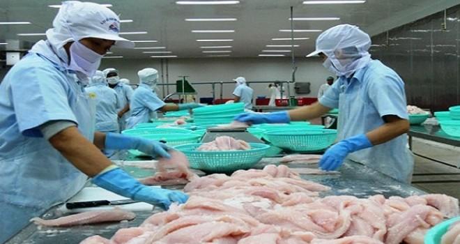 Ép giá nông dân, cá tra Việt Nam thấm đòn kiện tụng