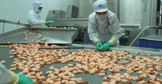 Công ty con của Thủy sản Minh Phú phát hành 1.000 tỷ đồng trái phiếu