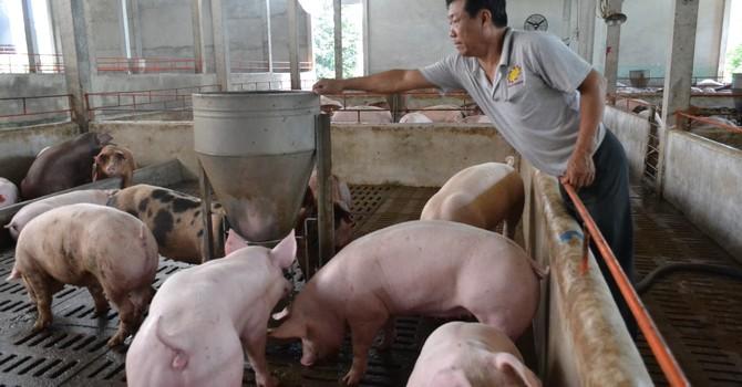 """Mới """"giải cứu"""" được một nửa số lợn dư thừa"""