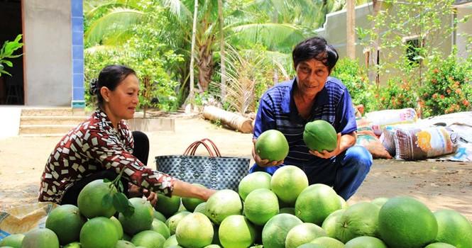 """Nhà vườn """"buồn thiu"""" vì trái cây giảm giá"""