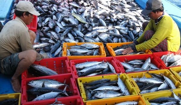 Sau EU, Hoa Kỳ cũng siết chặt hàng thủy sản nhập khẩu khai thác bất hợp pháp từ 1/1/2018