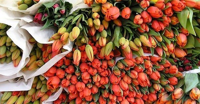 Chuộng hàng ngoại, người Việt chi 18 triệu USD nhập khẩu hoa, cây cảnh chơi Tết