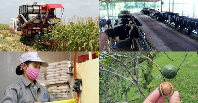 Thấy gì đằng sau việc đại gia đổ vốn lớn làm nông nghiệp?