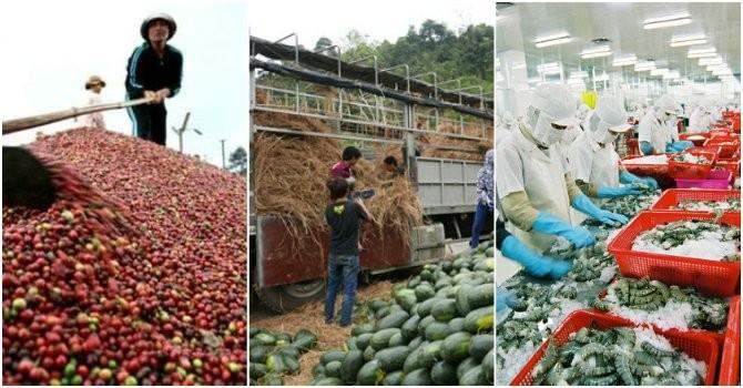 """""""Mổ xẻ"""" nguyên nhân xuất khẩu nông sản giảm mạnh"""