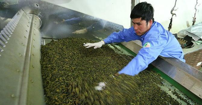 8 lô hàng xuất sang Đài Loan có dư lượng thuốc trừ sâu vượt mức cho phép