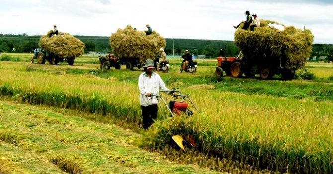 """""""Đáng tiền đầu tư"""" vì sao nông nghiệp vẫn lẹt đẹt?"""