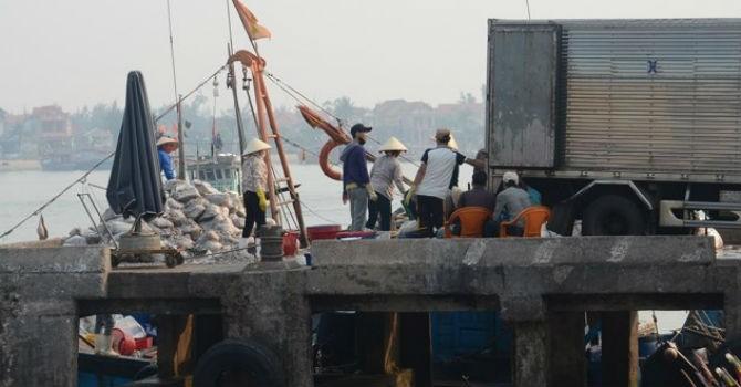 Thị trường 24h: Ai đứng sau nhóm người mua cá chết nhiễm độc?