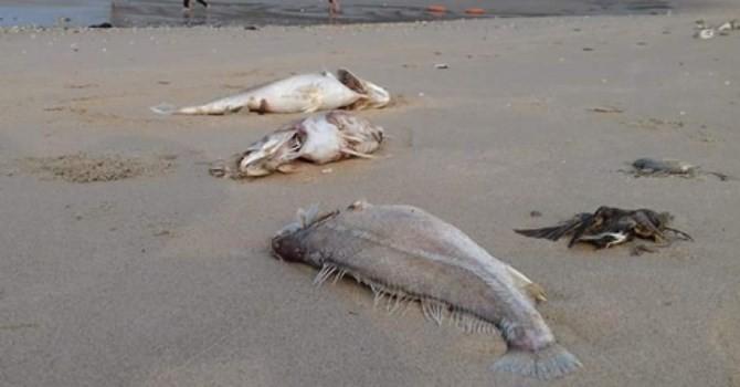 """Vụ cá chết hàng loạt: """"Chưa có kết luận chính thức nhưng có quyền đặt nghi vấn Formosa"""""""