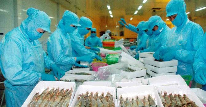 """Vụ cá chết bất thường: EU cảnh báo, Vasep khẳng định """"thuỷ sản an toàn"""""""