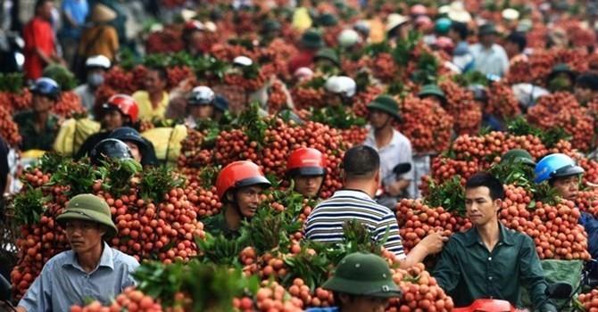 Thị trường 24h: Vải thiều vừa qua biên giới Trung Quốc đã tăng giá gấp đôi