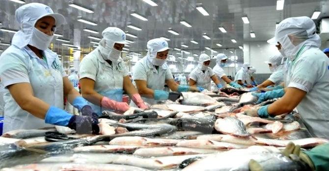 Xuất khẩu nông sản giảm mạnh do Trung Quốc gia tăng rào cản