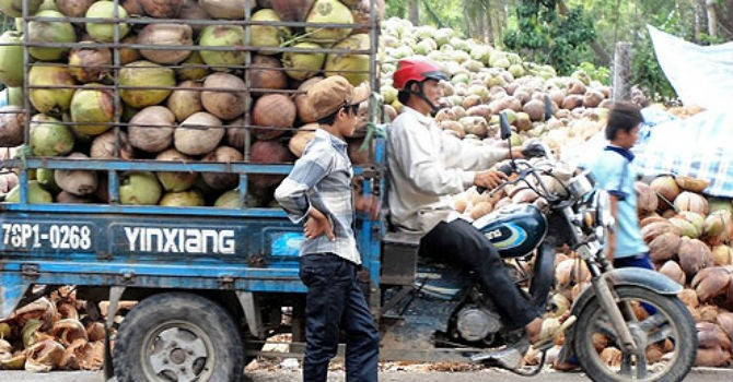 Thị trường 24h: Trung Quốc mua dừa khiến nhà máy ngưng hoạt động, hạt nhựa biến thành tổ yến