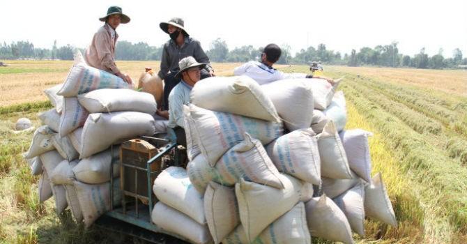 """Trung Quốc """"thiết lập tiêu chuẩn nhập khẩu"""", xuất khẩu gạo Việt giảm mạnh"""
