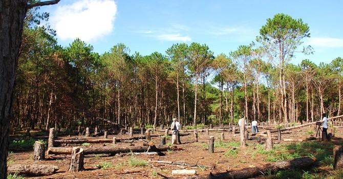 Hà Tĩnh: Cách chức, kỷ luật nhiều kiểm lâm vì để xảy ra phá rừng