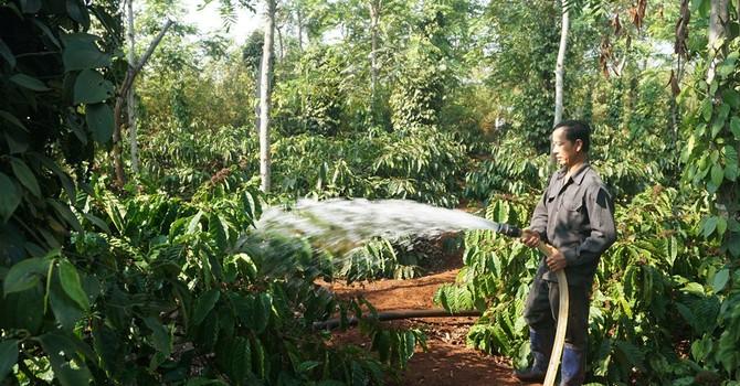 Nông dân Tây Nguyên lãng phí 40% lượng nước tưới cây cà phê