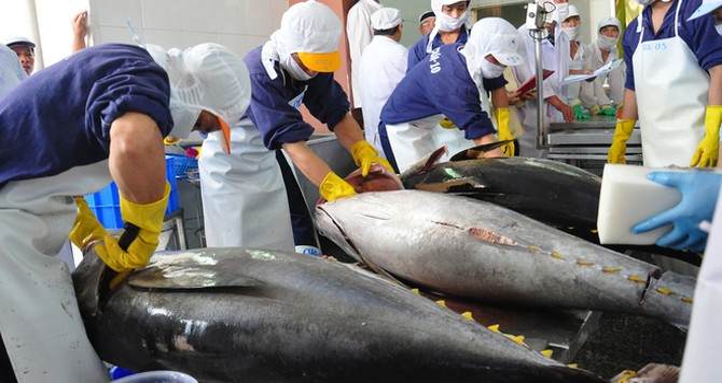 JICA hỗ trợ dự án xuất khẩu cá ngừ