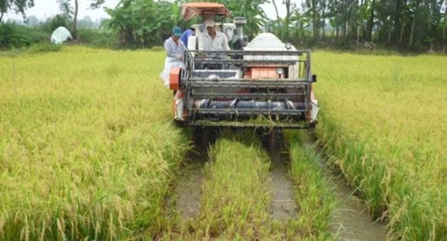 Nông dân trồng lúa thiếu thông tin thị trường