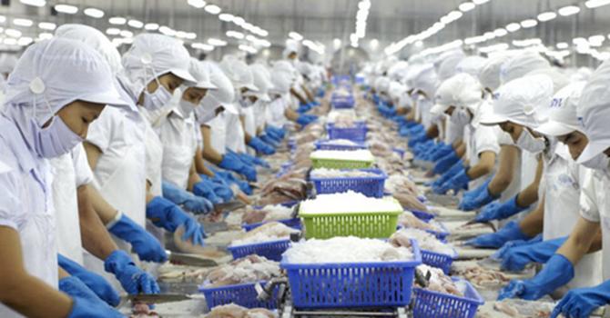 Thủy sản Vĩnh Hoàn xuất khẩu 103 triệu USD trong 5 tháng