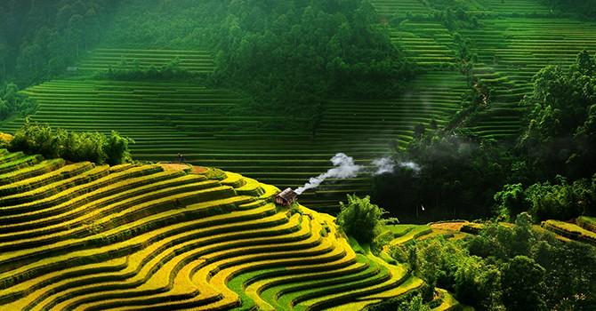 Japan's Kitoku Shinryo to Expand Rice Business in Vietnam