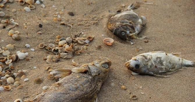 Kinh tế 7 ngày: Nóng chuyện Formosa xả thải ra biển