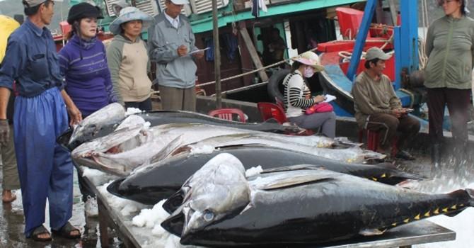 Thế giới giảm tiêu thụ cá ngừ Việt Nam