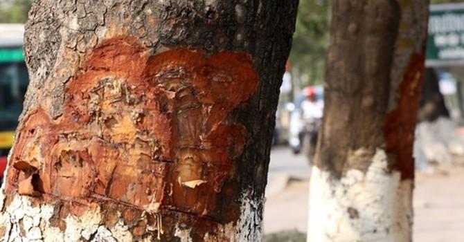 Hà Nội: Kêu gọi người dân tố cáo hành vi xâm hại cây xanh