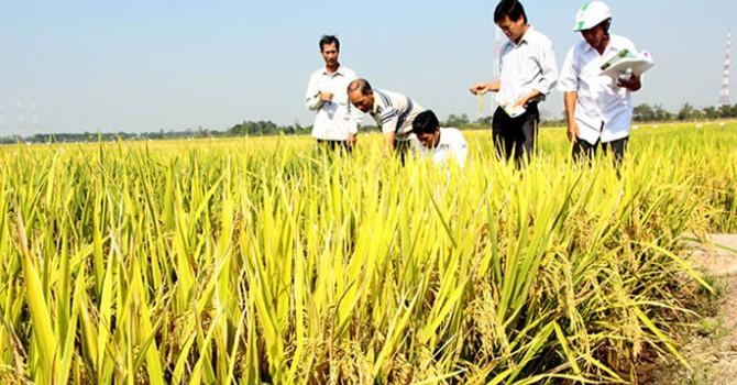 """Nhiều doanh nghiệp """"phá"""" hợp đồng ký kết với nông dân"""