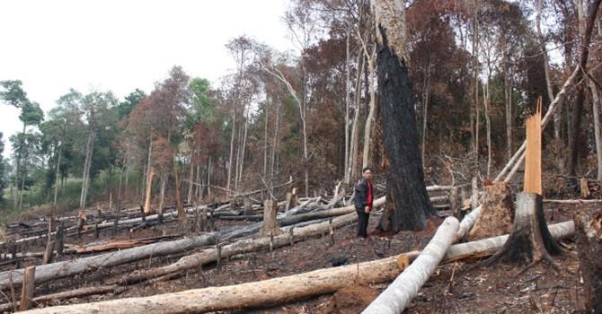 Vụ cán bộ nhà nước chỉ đạo phá rừng: Công an vào cuộc xử lý