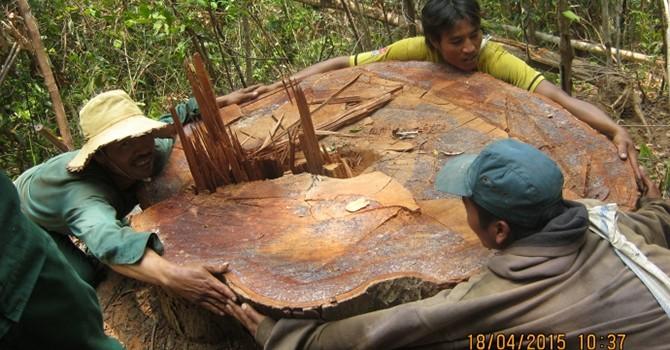 Người dân vây bắt gỗ lậu, chính quyền lại truy trách nhiệm chủ rừng
