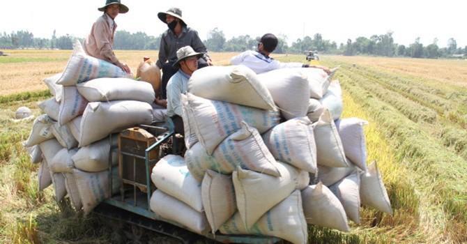 Tại sao giá gạo xuất khẩu Việt Nam thấp nhất thế giới?