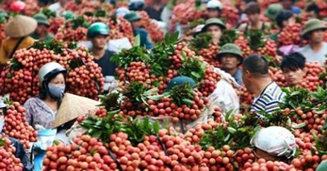 Úc cho phép nhập khẩu quả vải tươi từ Việt Nam