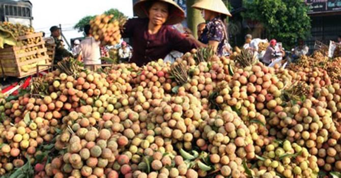 """Trái cây Việt Nam tìm lối ra từ những thị trường """"khó tính"""""""