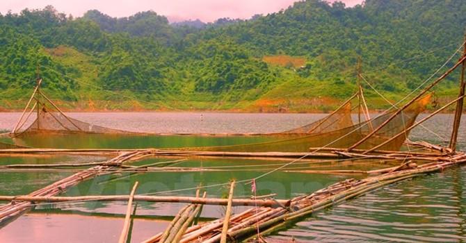 Tận diệt thủy sản không thương tiếc ở hồ thủy điện Tuyên Quang