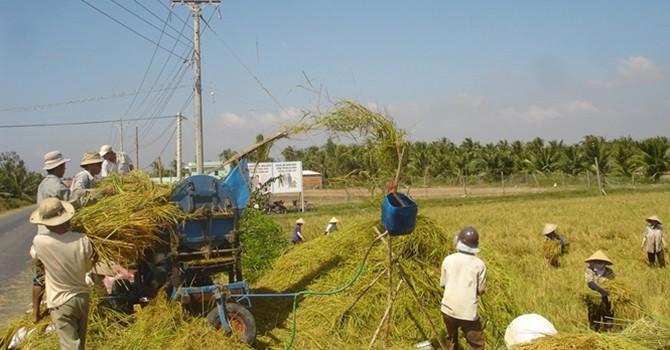 Thị trường lúa gạo ảm đạm