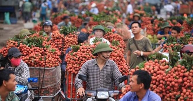 Sản xuất, tiêu thụ nông sản: Vẫn đùn đẩy trách nhiệm!